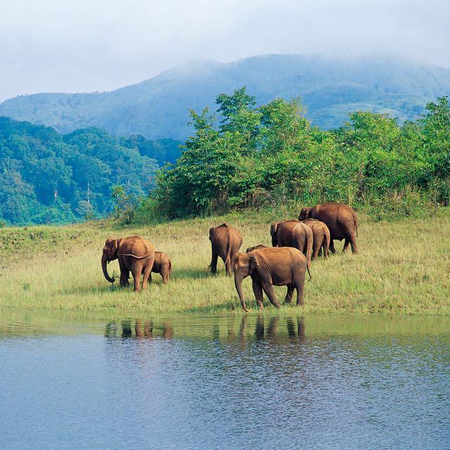Kerala honeymoons