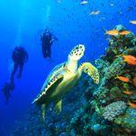 Marine life, Zanzibar