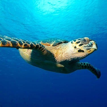 Cayman Islands honeymoon ideas