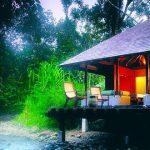 rainforest-setting