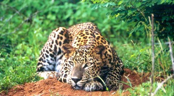 Selective Asia - Mahoora, Sri Lanka